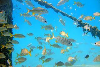 Turismo a Bonaire