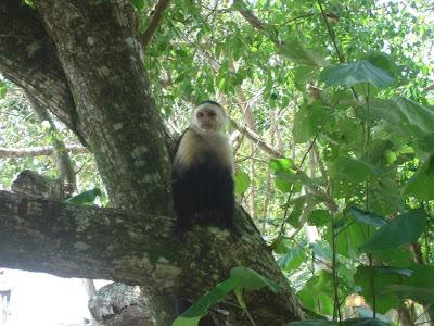 Costa Rica Selva