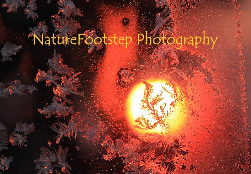 NatureFootstep Photography Archived