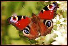 Macro, insecte