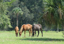 Cumberland Island, GA