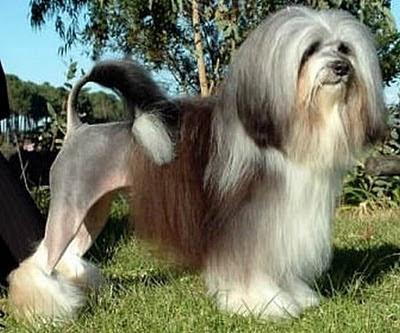 WEIRD NEWS: 10 Most Weirdest Dog Breeds