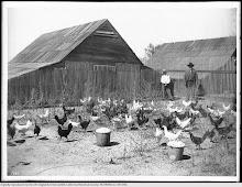 Chicken Ranch SFV