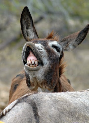 Gross Ugly Donkey Pict...