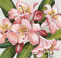 Washington Rhododendrens