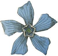 Dover flower