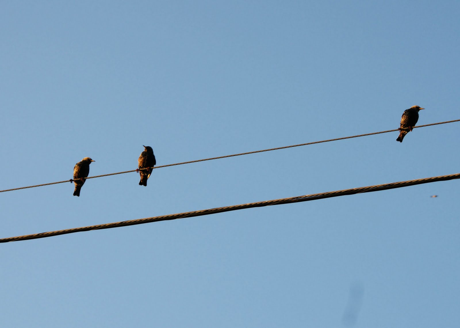 MCH Photography : Birds on wire