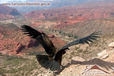 Condor en Cuesta de Miranda