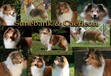 Sunebank & Caerleon News Page