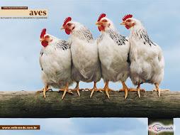 Alectorofobia : pavor de galinhas