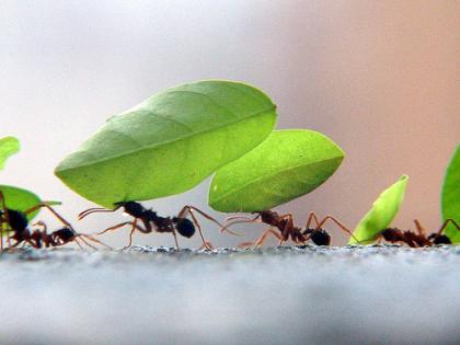 Formigas são pequenos versos que não dormem.