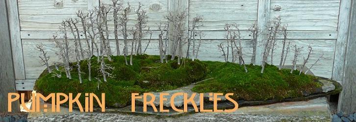 Pumpkin Freckles