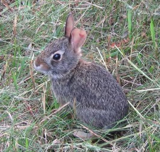[bunnies-008-crop.jpg]