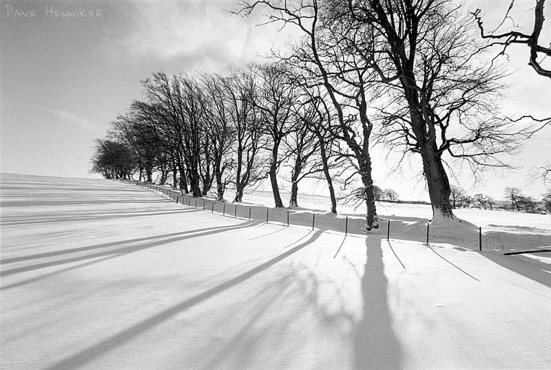 [a701trees_snow.jpg]