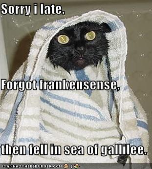 [funny-pictures-late-wet-wiseman-cat.jpg]