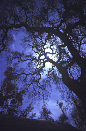 [full-moon-oak.jpg]