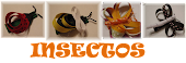 INSECTOS