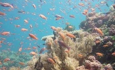 Aqua Venture Reef Club - Anilao