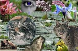 Cuidemos los ecosistemas de nuestro planeta....