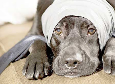 Pet Insurance Ireland