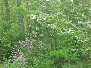 Mountain Laurel and Dogwood Trees