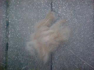 Rayna's hair