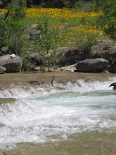 White Water on Hondo Creek
