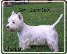 Mi perro Currito