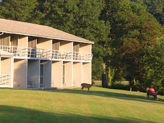 hotel with deer on lawn