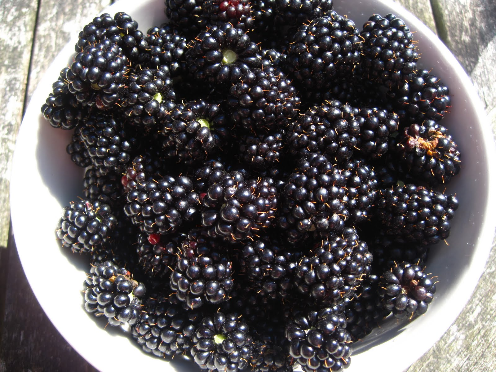 blackberry picking analysis Seamus heaney blackberry-picking analysis title analysis 'leaving stains upon the tongue and lust for picking.