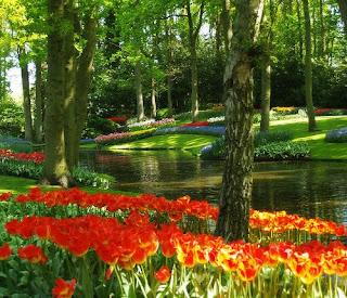 Natureza Arte Jardins De Keukenhof Amsterdam Holanda