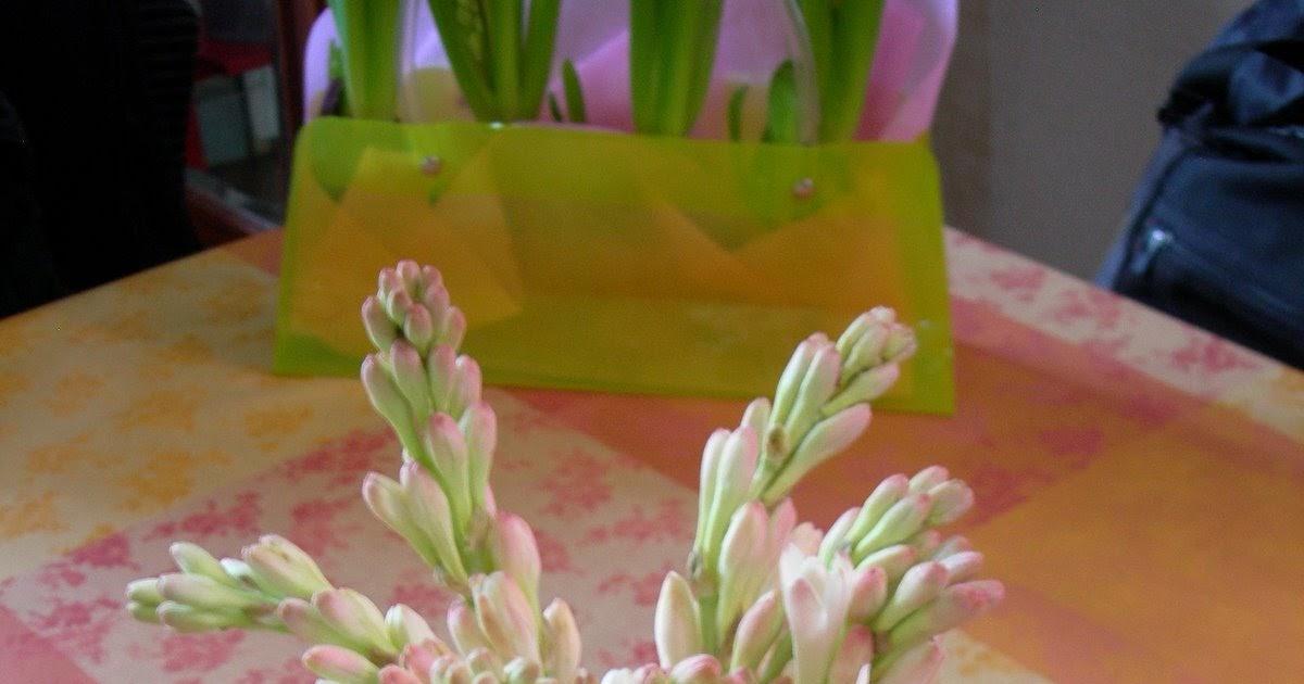 Paris côté jardin: Bouquet de tubéreuse