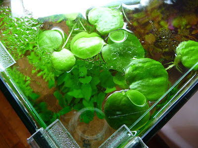 paris c t jardin nouveau decor pour mon aquarium nano dennerle. Black Bedroom Furniture Sets. Home Design Ideas