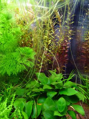 paris c t jardin mon mini jardin aquatique d 39 interieur. Black Bedroom Furniture Sets. Home Design Ideas