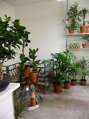Green factory la boutique des plantes d polluantes for Ventes de plantes par internet
