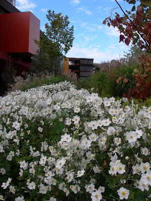 fleurs de fin d\'été – Paris côté jardin
