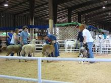 Class of Jr Ram Lambs