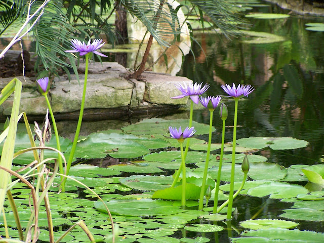 Purple flower in watergarden