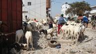 Geiten te koop voor het slachtfeest in Banjul