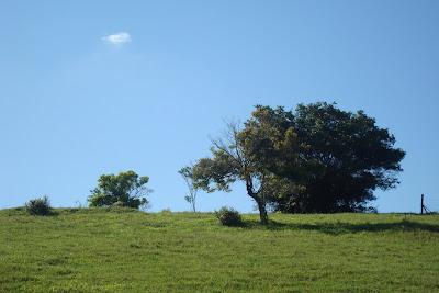 Relva, Prado, Campo