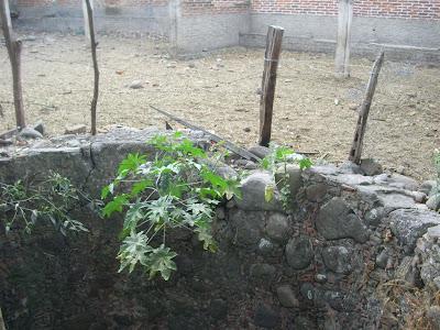 Visita al terreno de la noria con tunel y la aparición IMG_0204+%28Large%29