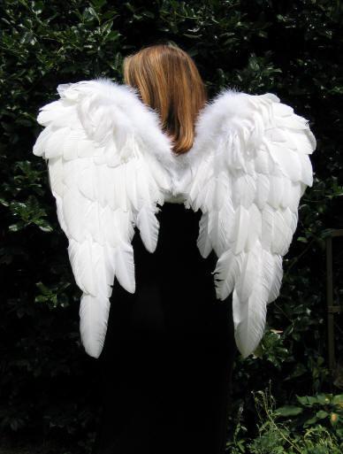 sayap puteh suci bersih ingin terbang ingin bebas terus terbang