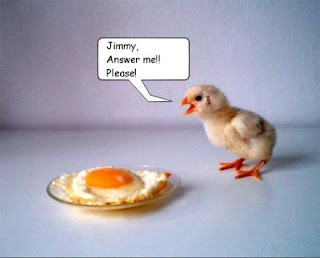anak ayam lucu