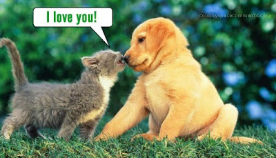puppy love cute puppy and kitten together