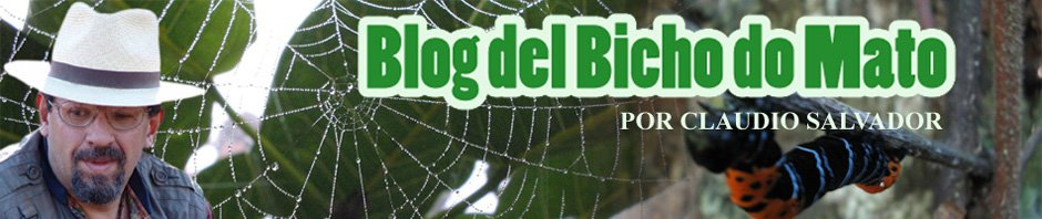 Blog del Bicho do Mato