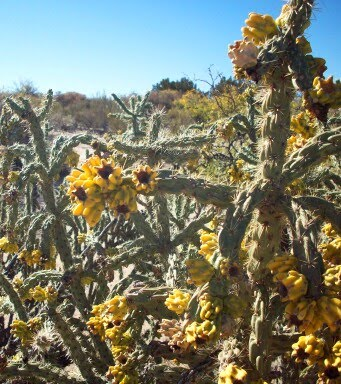 Gary And Delys Rv Travels New Mexico Flora And Fauna
