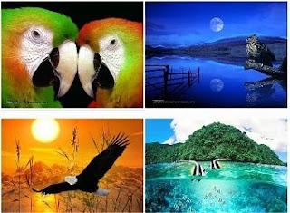 Wallpapers Natureza e Vida Selvagem 3D