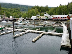 Telegraph Cove telt 6 inwoners