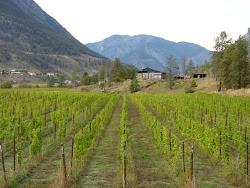 De enige wijngaard in de Cariboo