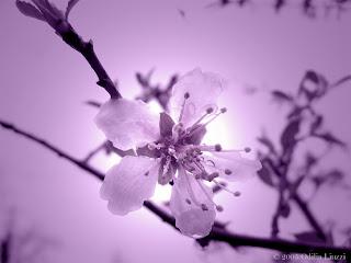 http://2.bp.blogspot.com/_K9V35G81UY8/R1Gpxxbj7yI/AAAAAAAAACY/To72ERGPkjo/s320/violet_heart.jpg